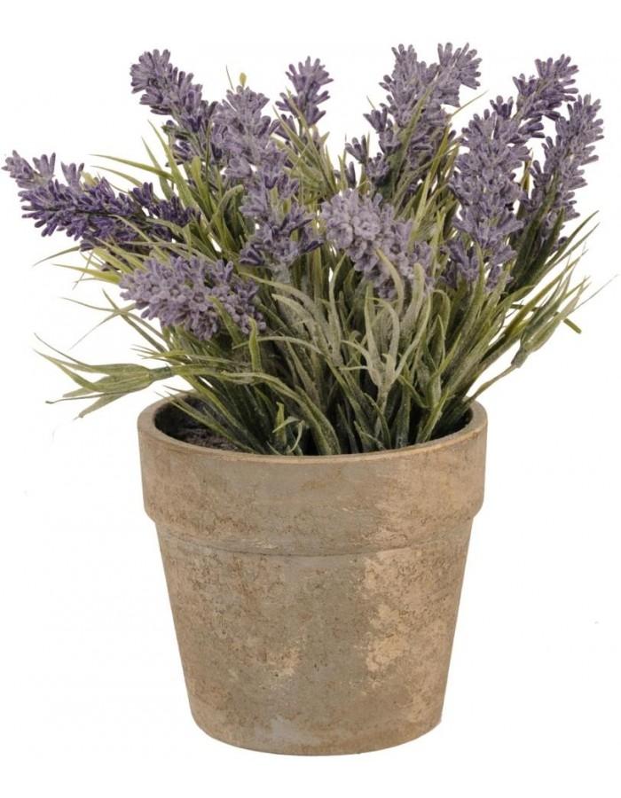 Deko Lavendel Im Topf O 12x26 Clayre Eef Fotoalben Discount De