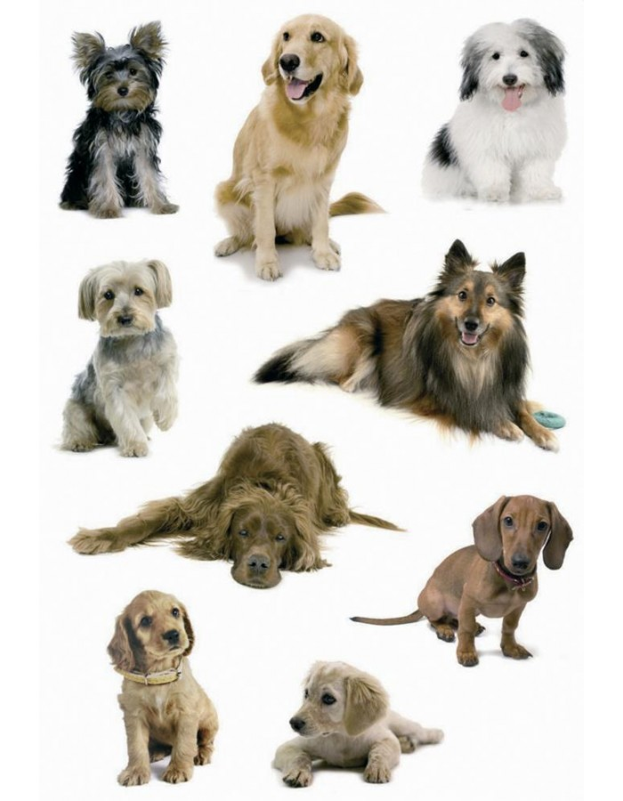 Beautiful stickers with dogs - self adhesive, DECOR