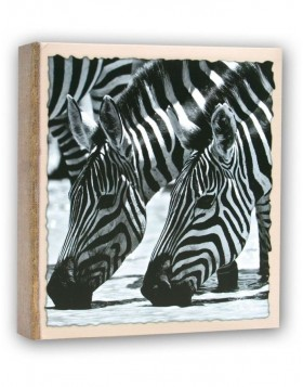 WILD LIFE slip-in album 100 photos 13x19 cm