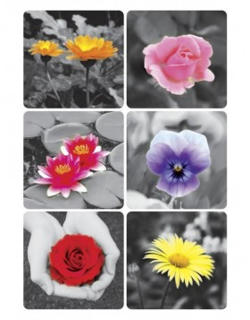 decorative labels DECOR Fotos I 3 sheets