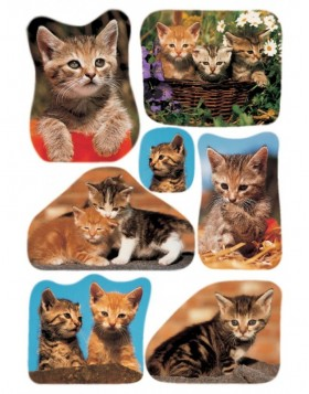 HERMA DECOR stickers photos of cats 3 sheets