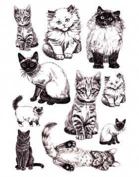 Stickers Cats DECOR, self adhesive