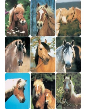 decorative labels Horses - DECOR