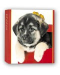 slip-in album PET CLUB 11x16 cm and 13x19 cm