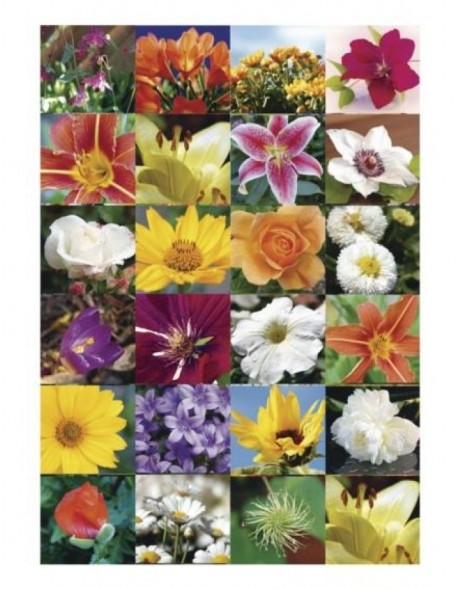 HERMA Sticker DECOR Flower realm