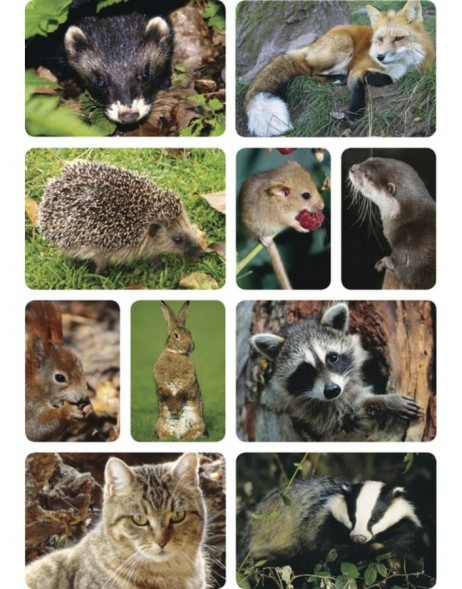 HERMA Sticker DECOR Forest animals photo