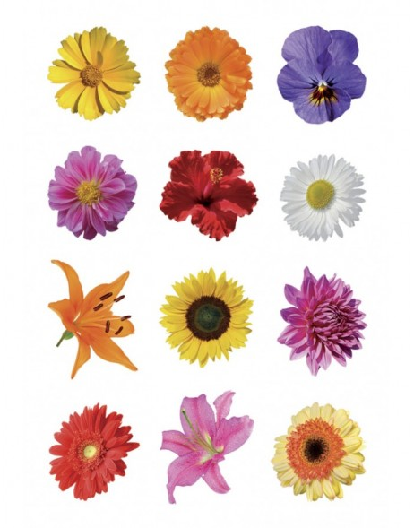Schmucketiketten DECOR Bunte Gerberas 3 Bl.