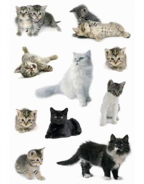 Beautiful stickers with cats - self adhesive, DECOR